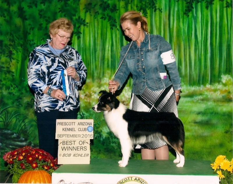 Joy taking Best of Winners @ an AZ show